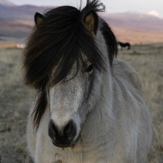 hevosen ja ponin nimiä